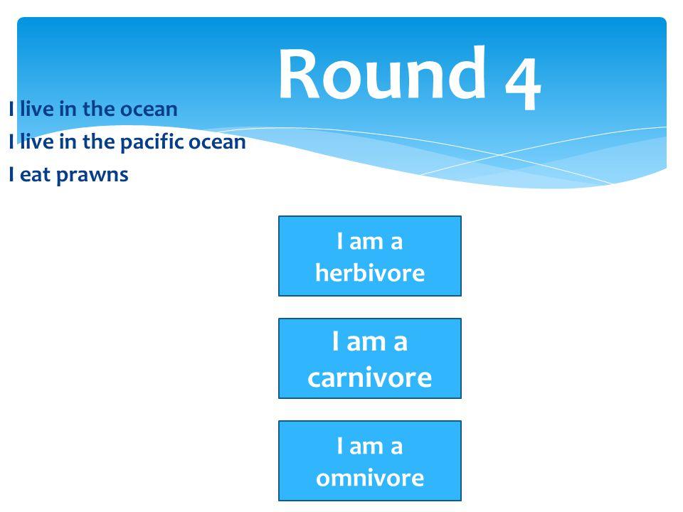 Round 4 I am a carnivore I am a herbivore I am a omnivore