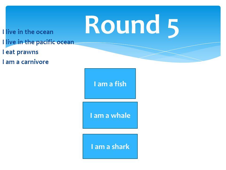 Round 5 I am a fish I am a whale I am a shark