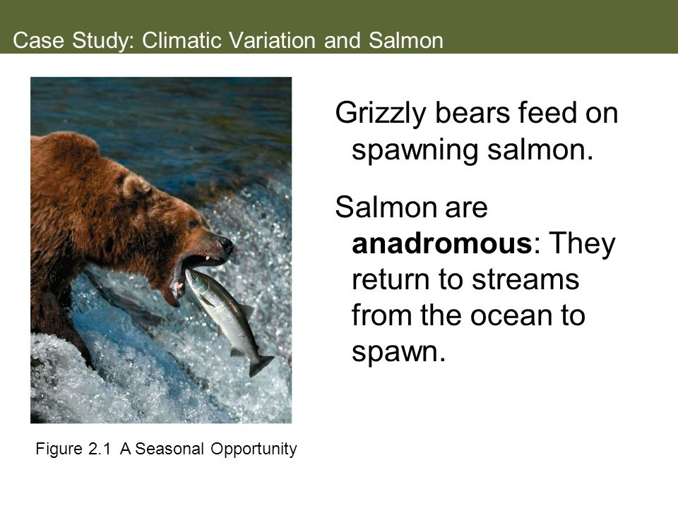 Case Study: Climatic Variation and Salmon