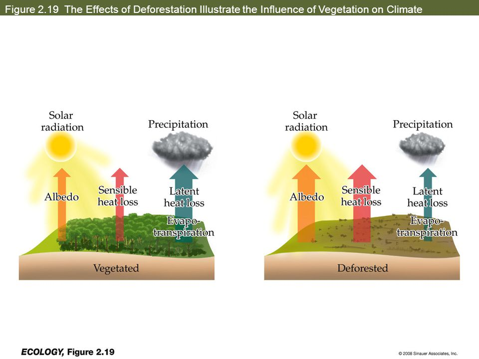 Figure 2.19 The Effects of Deforestation Illustrate the Influence of Vegetation on Climate