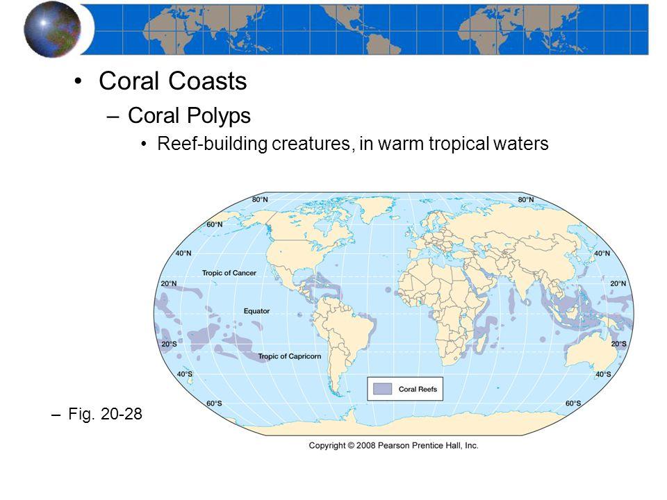Coral Coasts Coral Polyps