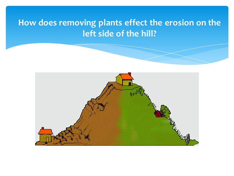 How does removing plants effect the erosion on the left side of the hill