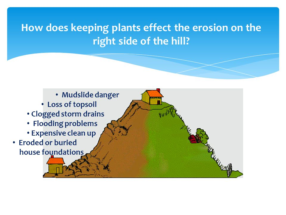 How does keeping plants effect the erosion on the right side of the hill
