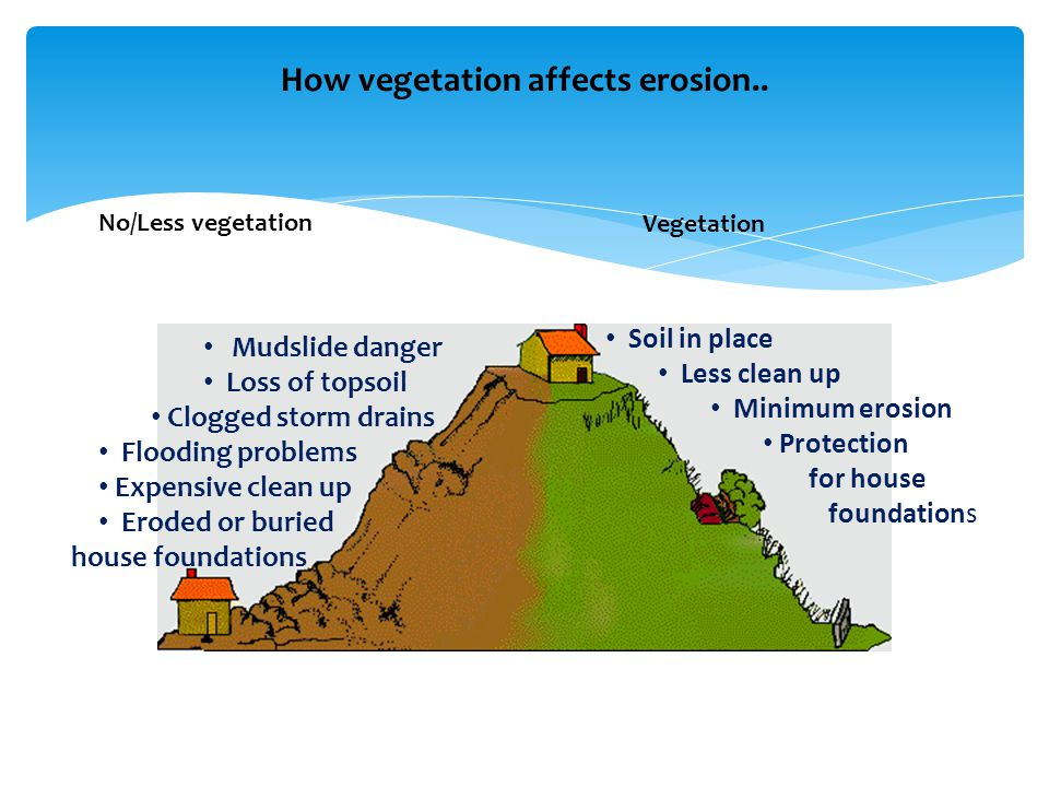How vegetation affects erosion..