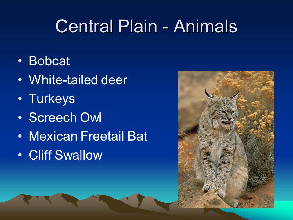 Central Plain - Animals