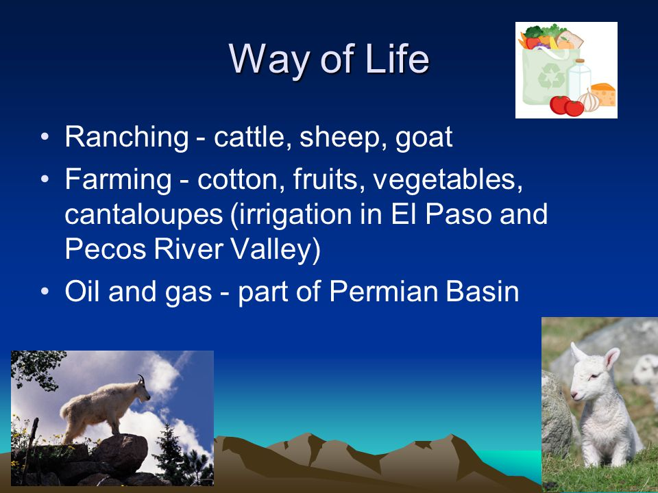 Way of Life Ranching - cattle, sheep, goat