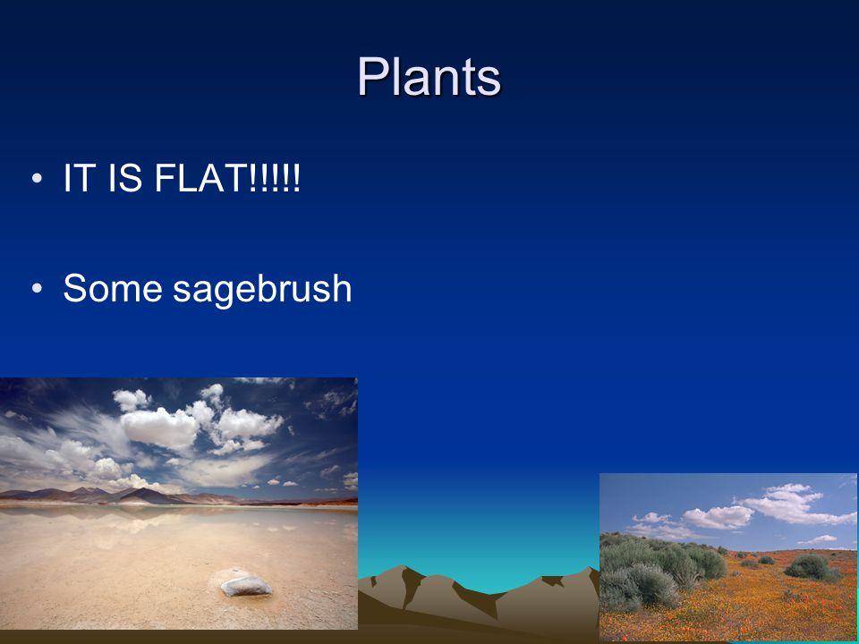 Plants IT IS FLAT!!!!! Some sagebrush