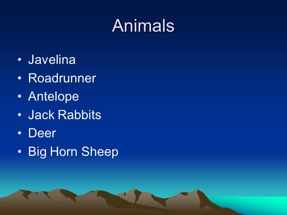 Animals Javelina Roadrunner Antelope Jack Rabbits Deer Big Horn Sheep