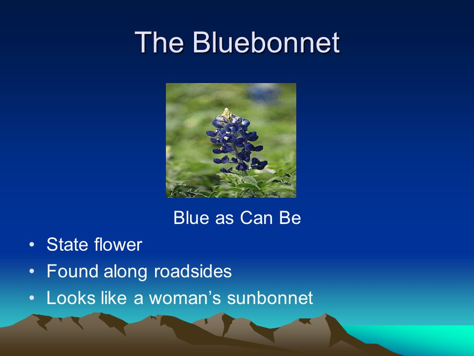The Bluebonnet Blue as Can Be State flower Found along roadsides