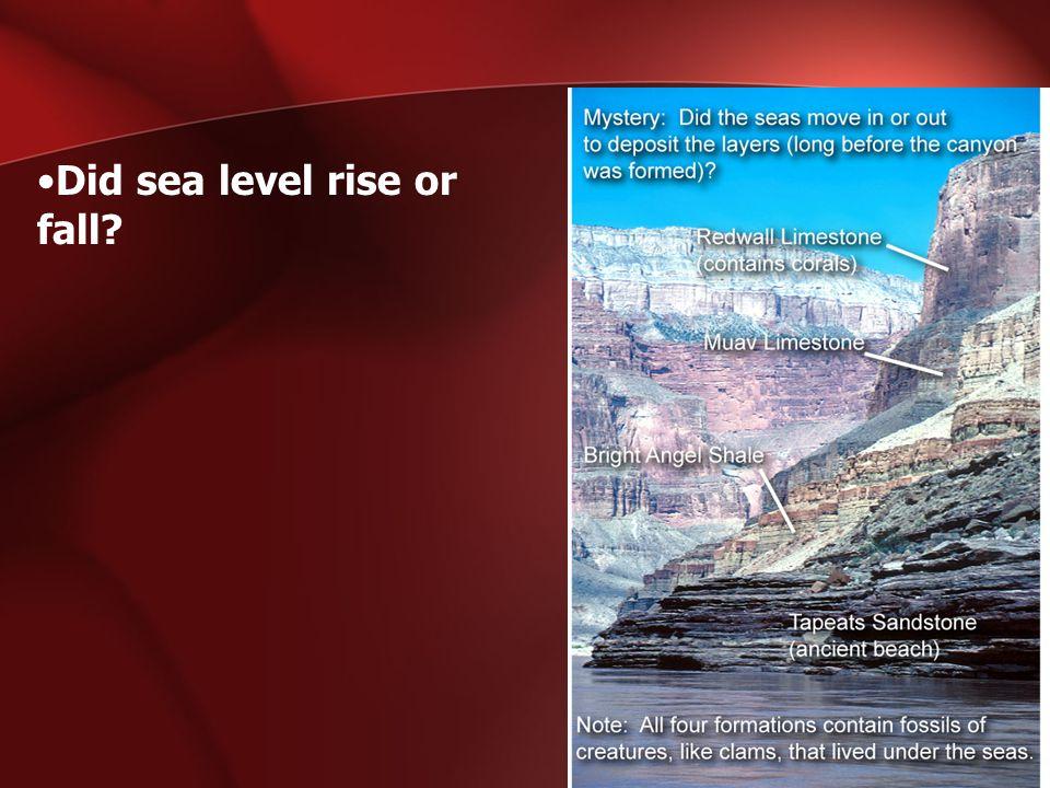 Did sea level rise or fall