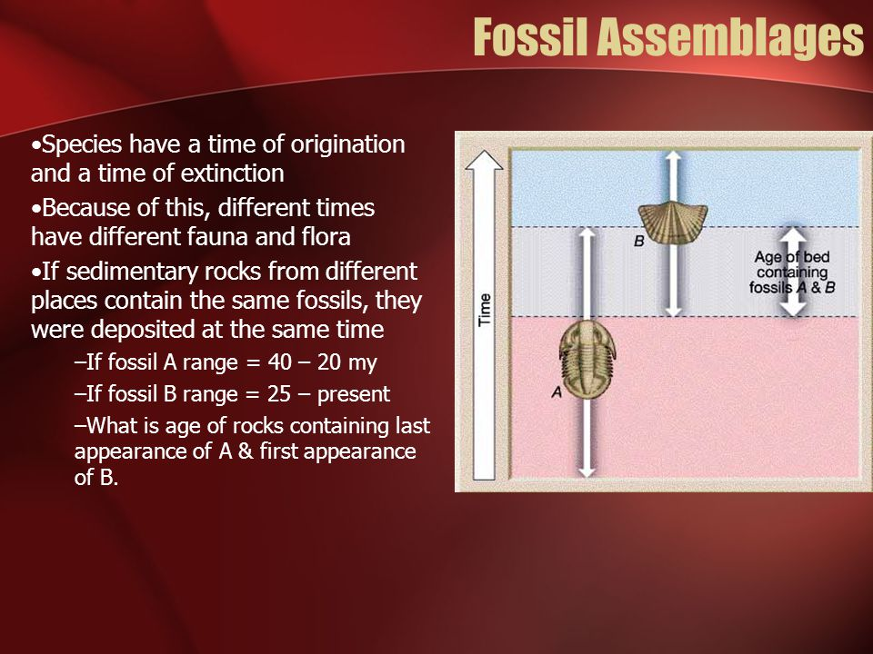 Fossil Assemblages Species have a time of origination and a time of extinction. Because of this, different times have different fauna and flora.