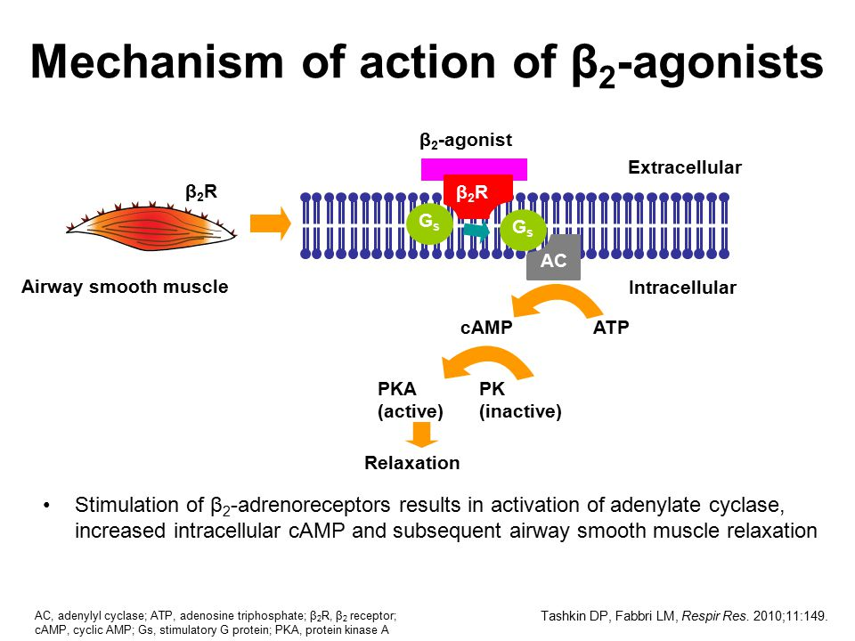 Mechanism of action of β2-agonists