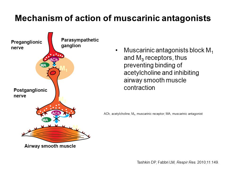 Mechanism of action of muscarinic antagonists