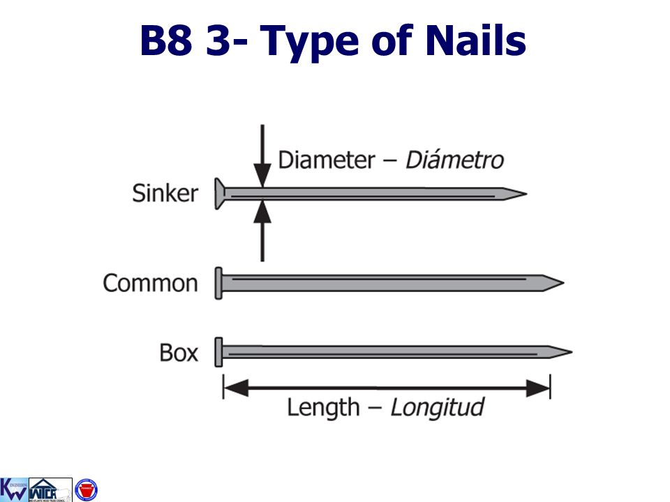 B8 3- Type of Nails