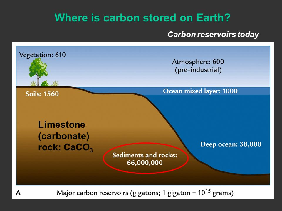 Carbon reservoirs today