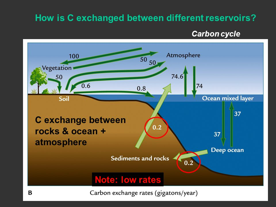 How is C exchanged between different reservoirs