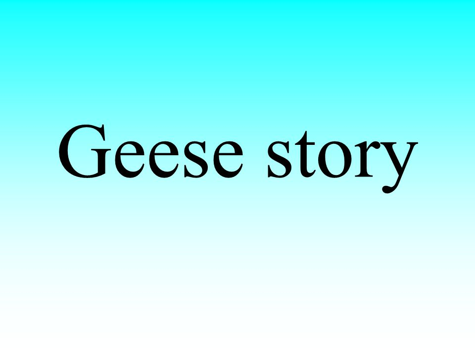 Geese story