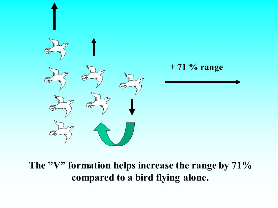 The V formation helps increase the range by 71%