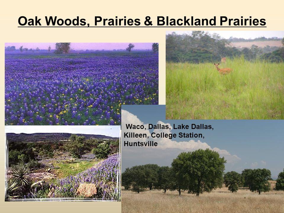 Oak Woods, Prairies & Blackland Prairies