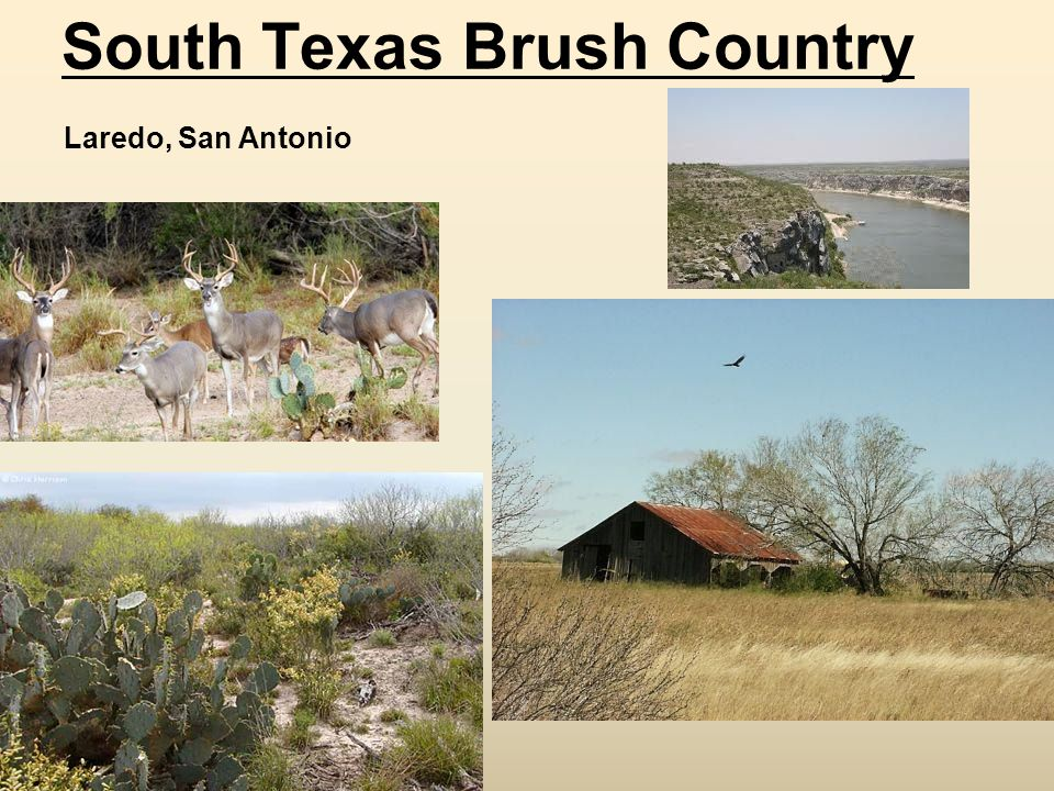 South Texas Brush Country