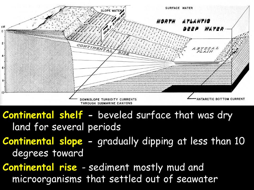 Continental shelf - beveled surface that was dry land for several periods in the past 66 million years