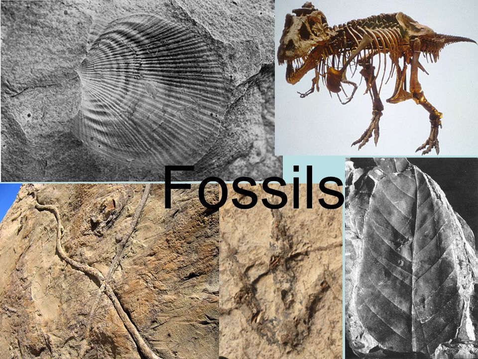 Fossils Fossils