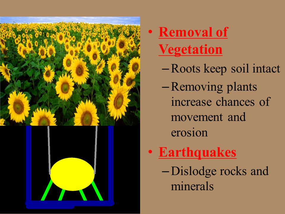 Removal of Vegetation Earthquakes Roots keep soil intact