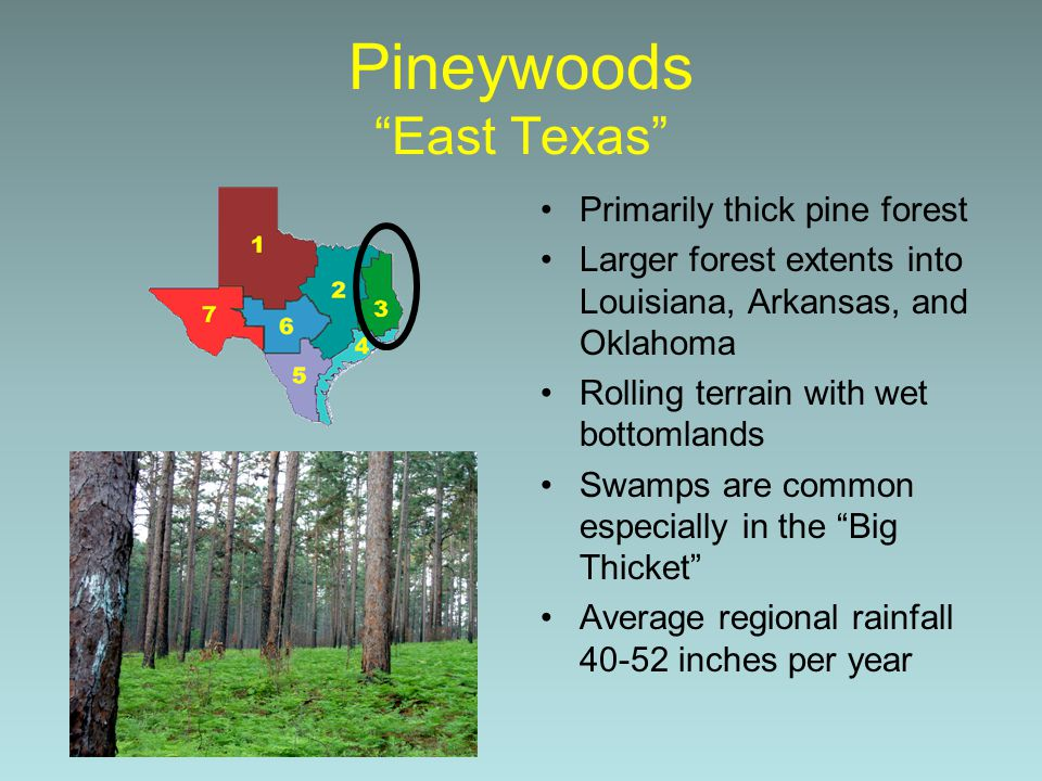 Pineywoods East Texas