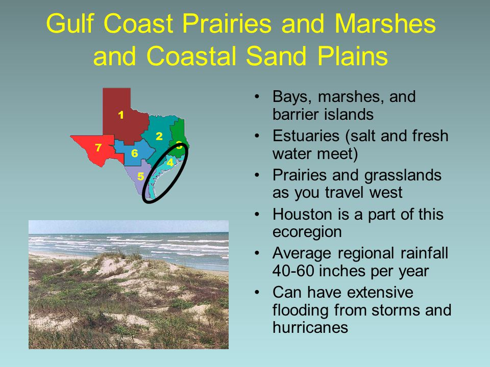 Gulf Coast Prairies and Marshes and Coastal Sand Plains
