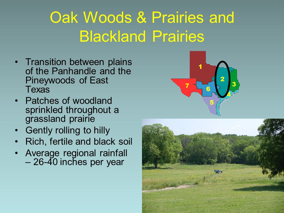 Oak Woods & Prairies and Blackland Prairies