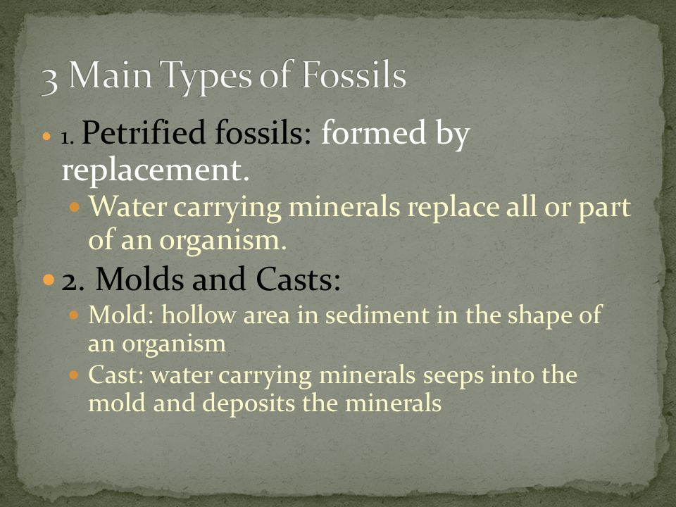 3 Main Types of Fossils 2. Molds and Casts: