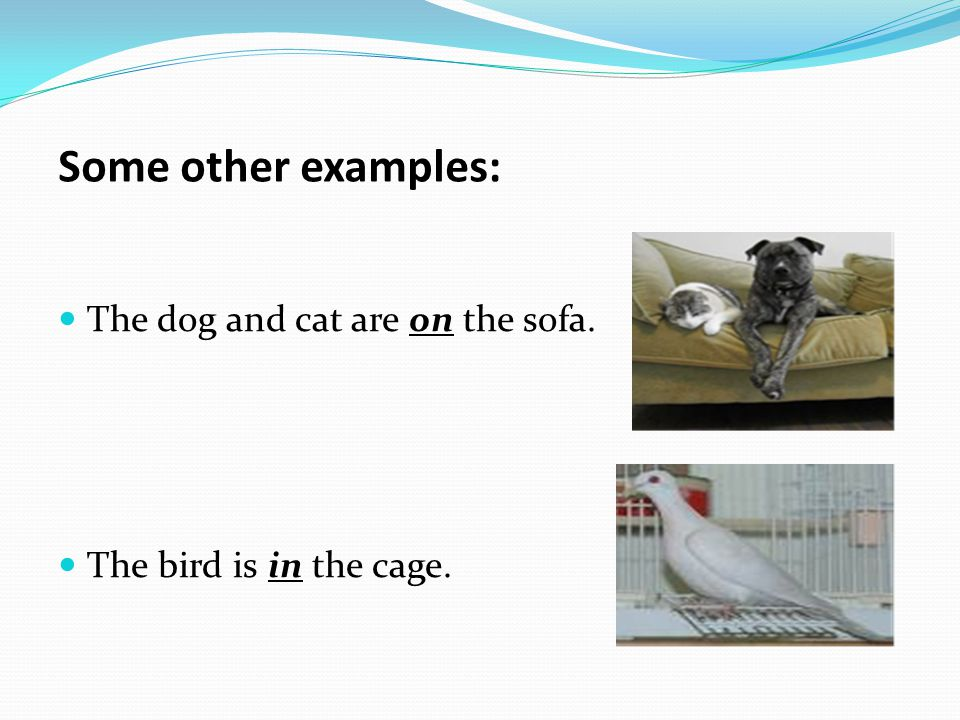 Some other examples: The dog and cat are on the sofa.