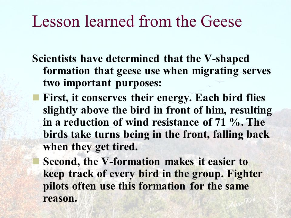 Lesson learned from the Geese
