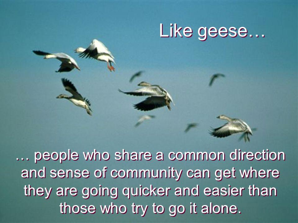 Like geese…