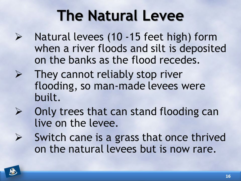 The Natural Levee Natural levees (10 -15 feet high) form when a river floods and silt is deposited on the banks as the flood recedes.