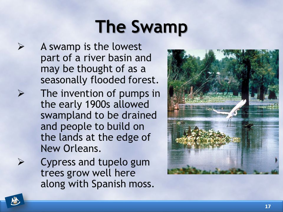 The Swamp A swamp is the lowest part of a river basin and may be thought of as a seasonally flooded forest.