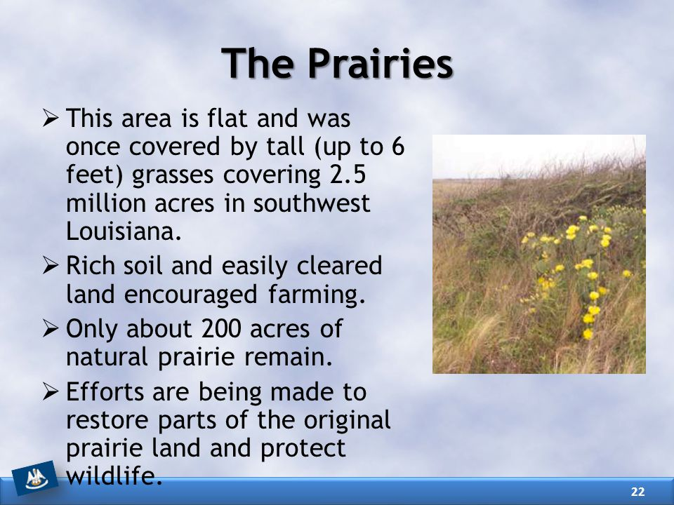 The Prairies This area is flat and was once covered by tall (up to 6 feet) grasses covering 2.5 million acres in southwest Louisiana.