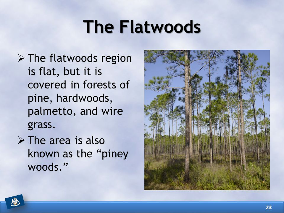The Flatwoods The flatwoods region is flat, but it is covered in forests of pine, hardwoods, palmetto, and wire grass.