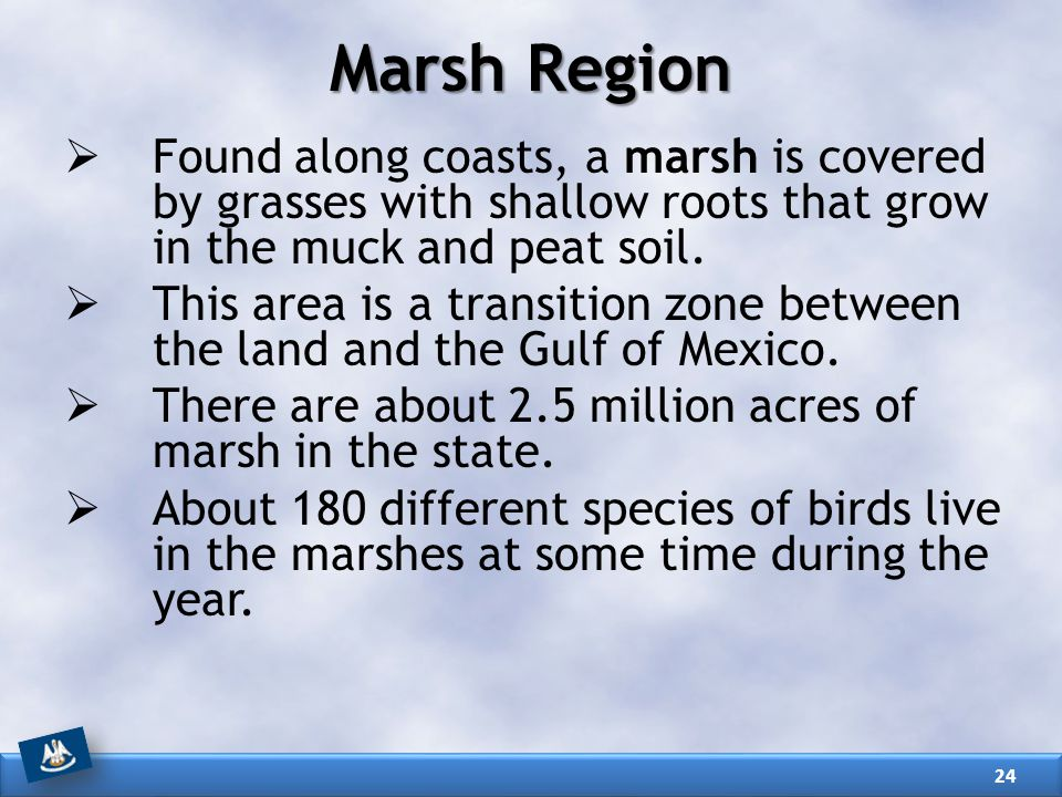 Marsh Region Found along coasts, a marsh is covered by grasses with shallow roots that grow in the muck and peat soil.