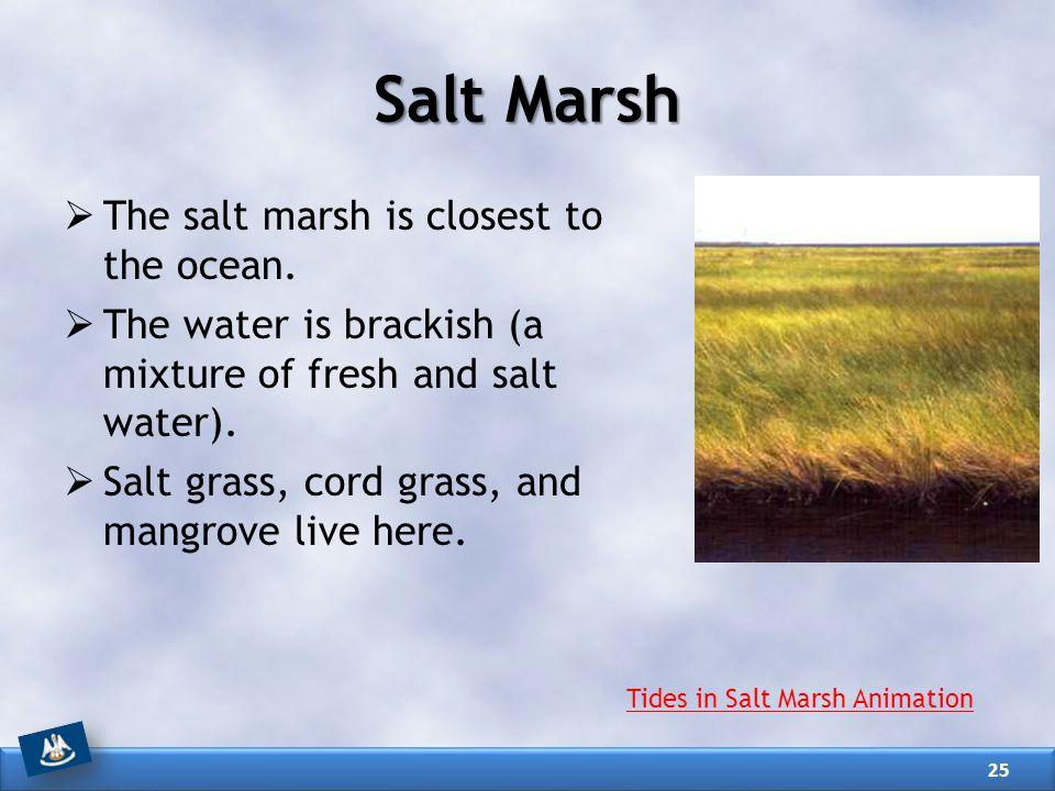 Salt Marsh The salt marsh is closest to the ocean.