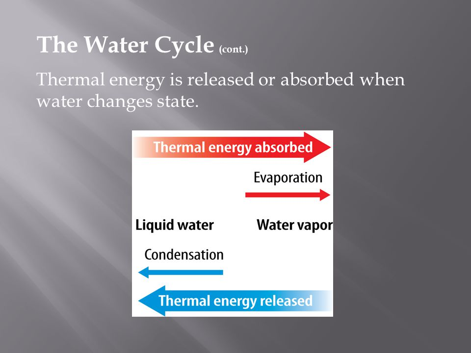The Water Cycle (cont.) Thermal energy is released or absorbed when water changes state.