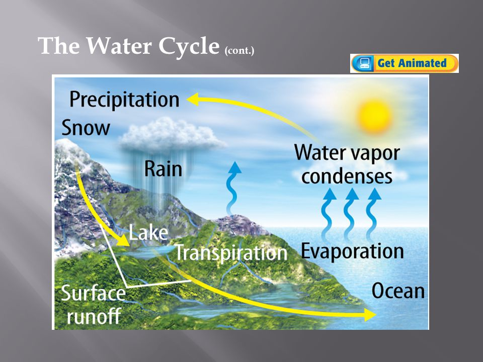The Water Cycle (cont.)