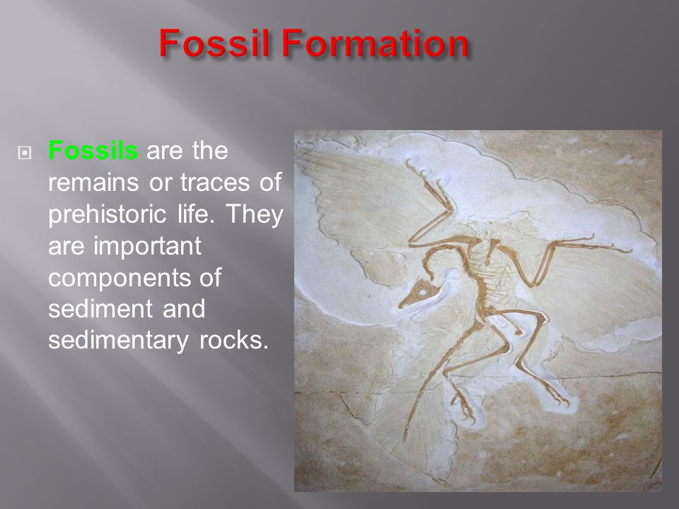 Fossil Formation Fossils are the remains or traces of prehistoric life.