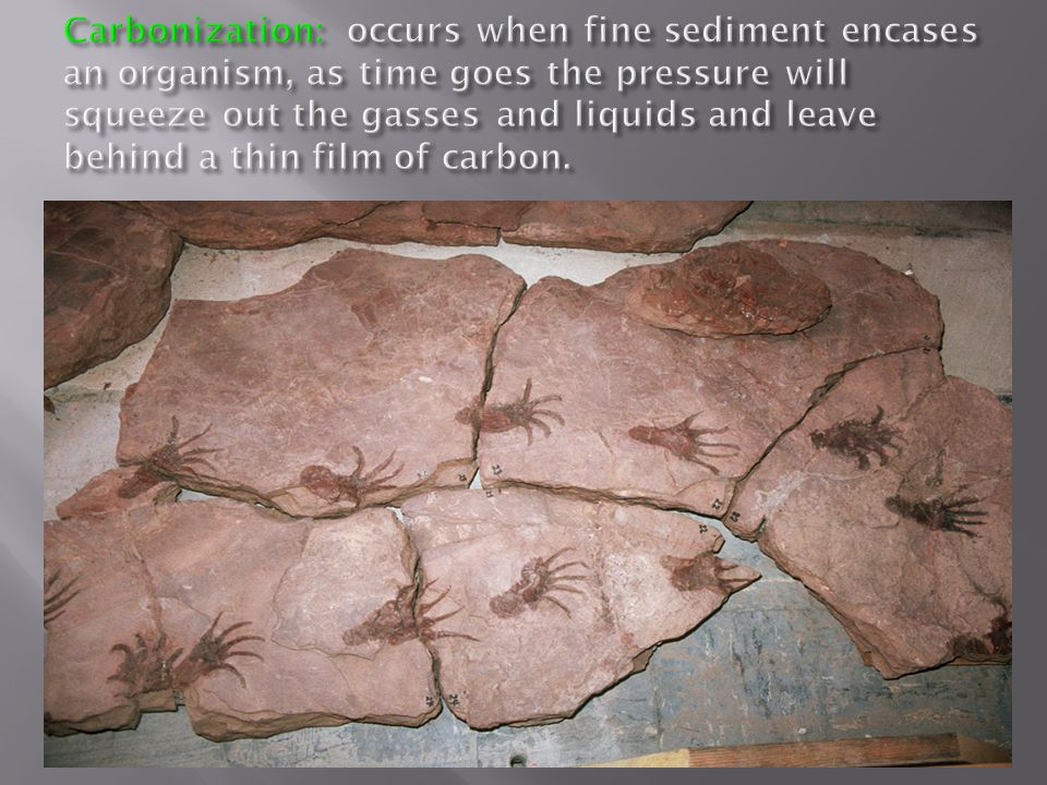 Carbonization: occurs when fine sediment encases an organism, as time goes the pressure will squeeze out the gasses and liquids and leave behind a thin film of carbon.