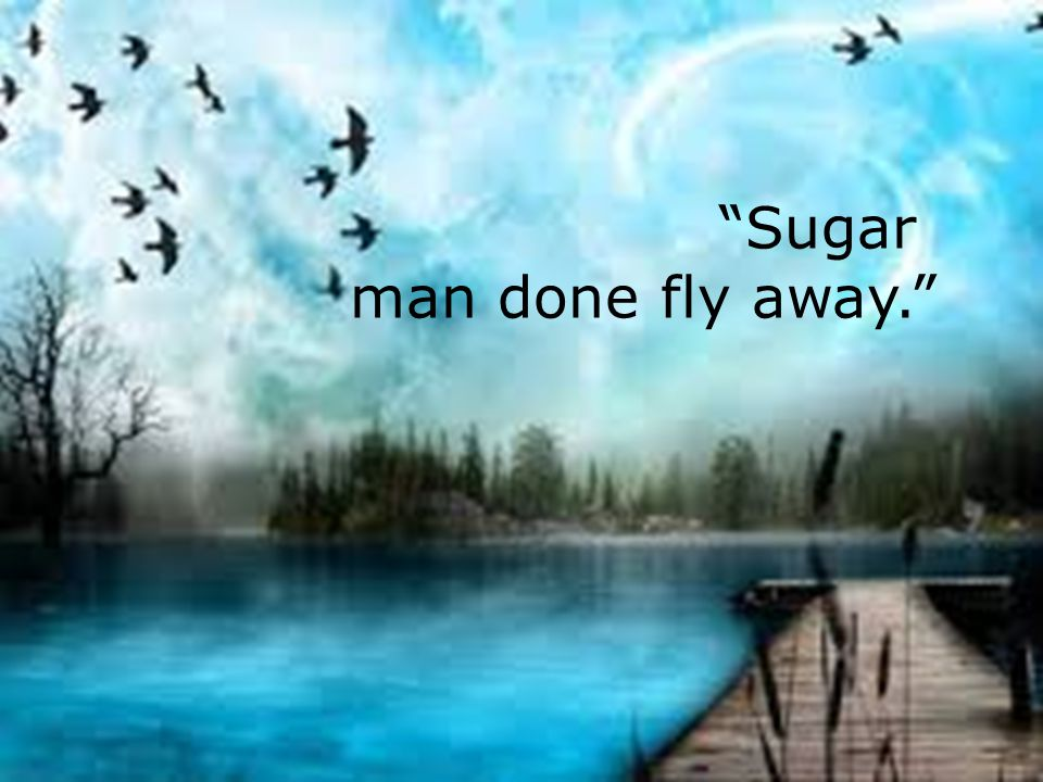 Sugar man done fly away.