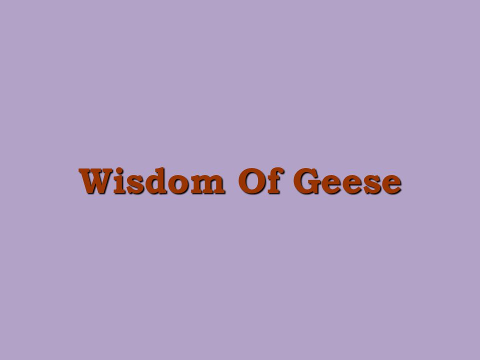 Wisdom Of Geese