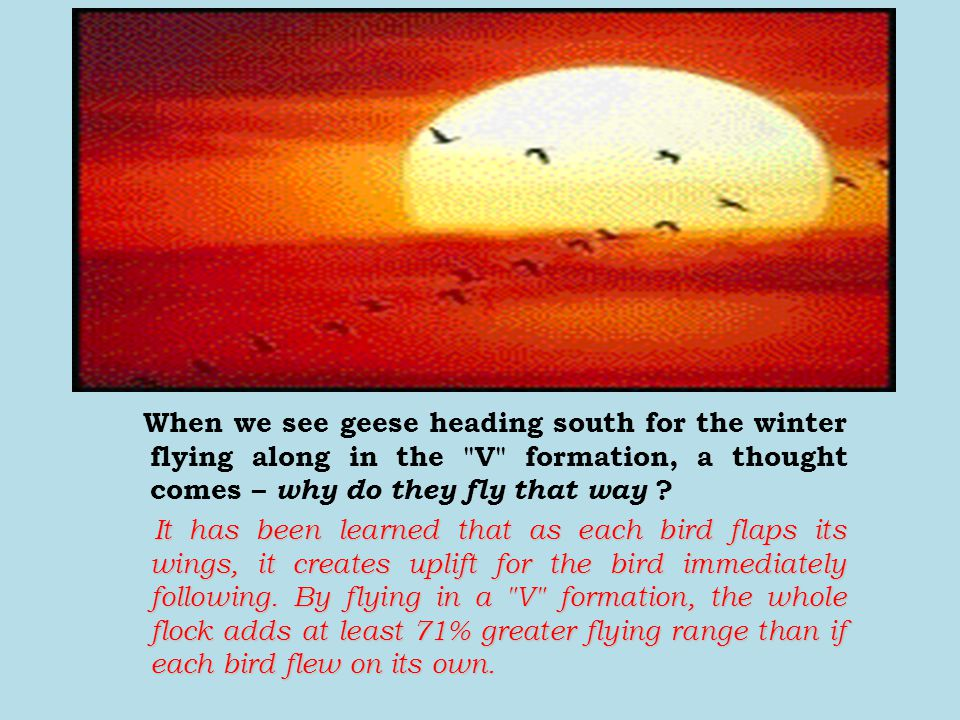 When we see geese heading south for the winter flying along in the V formation, a thought comes – why do they fly that way