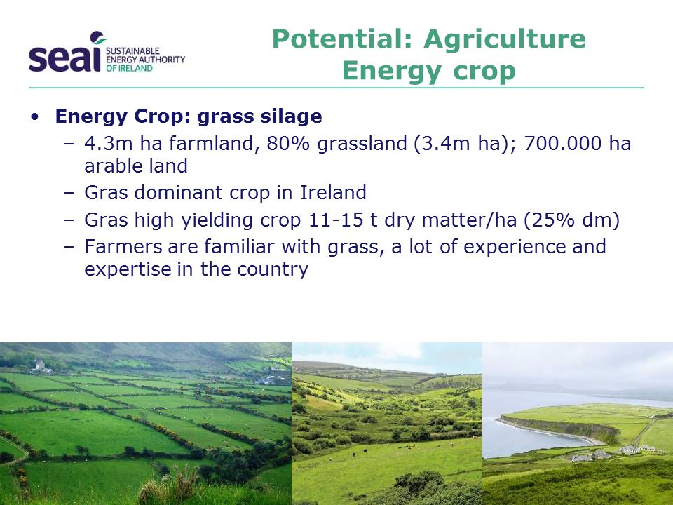 Potential: Agriculture Energy crop