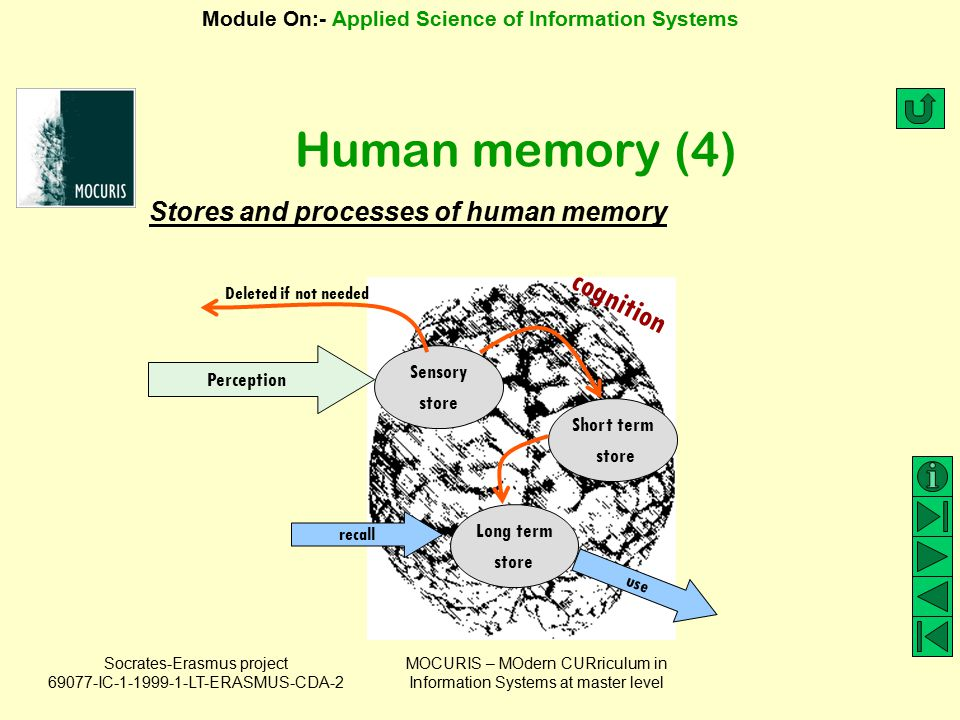 Human memory (4) cognition Stores and processes of human memory