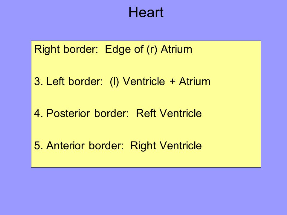 Heart Right border: Edge of (r) Atrium